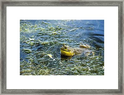 Frog Song Framed Print