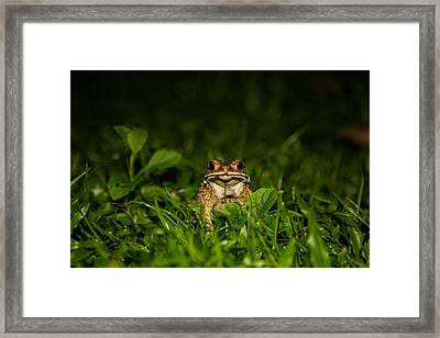 Frog Stare Framed Print by Mike Lee