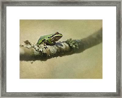 Frog Up A Tree Framed Print