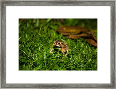 Froggie Framed Print by Mike Lee