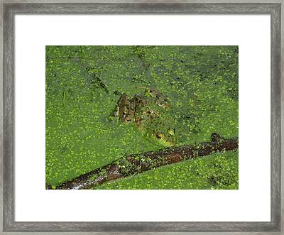 Framed Print featuring the photograph Froggie by Robert Nickologianis