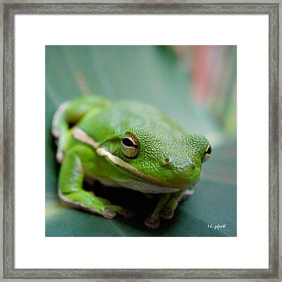 Froggy Smile Squared Framed Print by TK Goforth