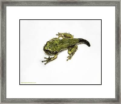 Frogs At Bear Creek Nature Park  Framed Print by LeeAnn McLaneGoetz McLaneGoetzStudioLLCcom