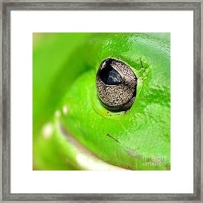 Frog's Eye Framed Print by Kaye Menner