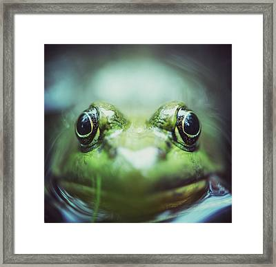 Frogs Level Framed Print by Shaunl