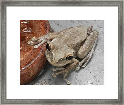 Frogs Rule Framed Print by Belinda Lee