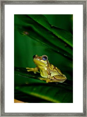 Frogtastic Framed Print by Trish Tritz