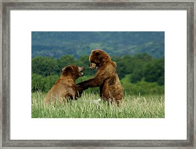 Frolicking Grizzly Bears Framed Print by Patricia Twardzik