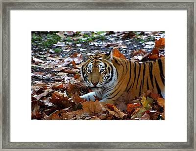 Frolicking In The Leaves Framed Print