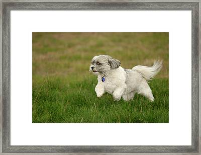 Frollic Framed Print by Arthur Fix