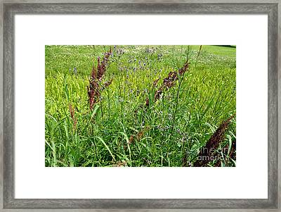 From A Soldier's Perspective 1 Framed Print by Alys Caviness-Gober