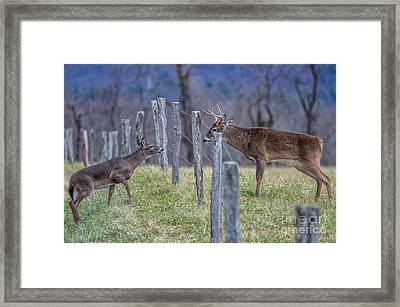 From Across The Fence Framed Print by Anthony Heflin