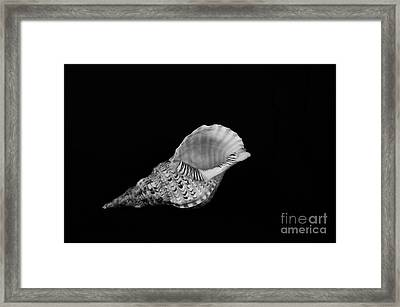 From Another Place Framed Print by Randi Grace Nilsberg