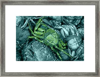 From Another Planet Framed Print by Steve K