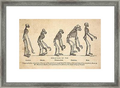 From Ape To Man, 1863 Framed Print by Paul D. Stewart