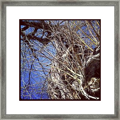 From Beneath Framed Print by Beth Burns