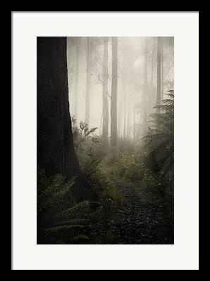 Mount Donna Buang Framed Prints