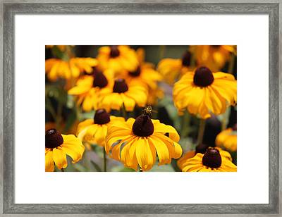 From Flower To Flower Framed Print