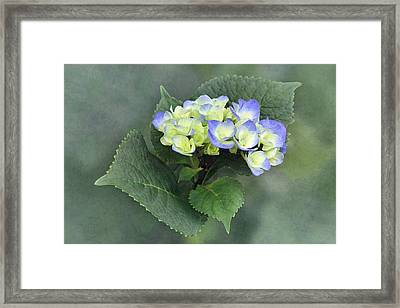 From Green To Blue Framed Print by Angie Vogel