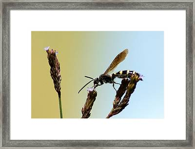 From Here To There Framed Print by Kim Pate