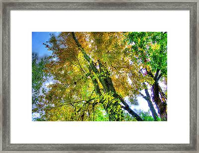 From My Back Yard Framed Print by Todd Carter