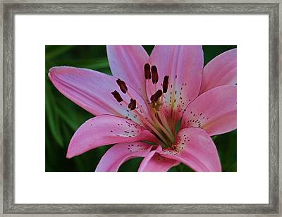 From My Flower Garden Framed Print by Victoria Sheldon