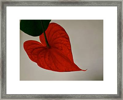 From My Heart To Yours Framed Print