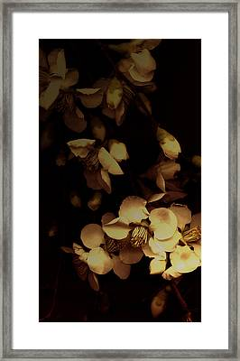 From The Darkness Into The Light Framed Print