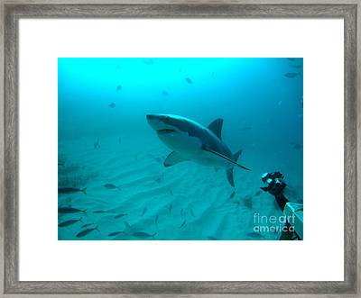 From The Deep Framed Print by Crystal Beckmann