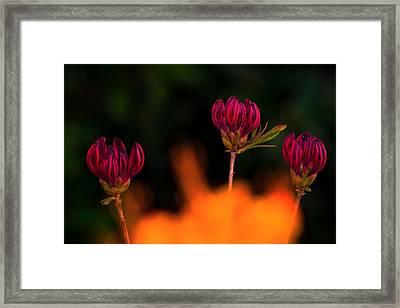 From The Fire Framed Print by Tomasz Dziubinski