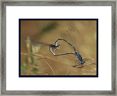 Love Bugs From The Heart Framed Print