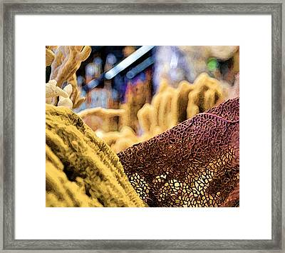 Framed Print featuring the photograph From The Sea by Pamela Blizzard