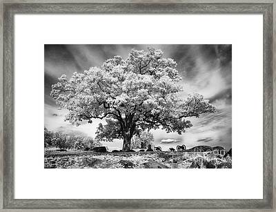 From The Top Of Devil's Den Framed Print