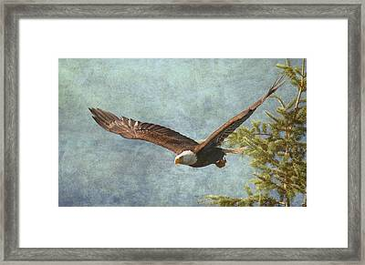 From The Tree Tops Framed Print by Angie Vogel