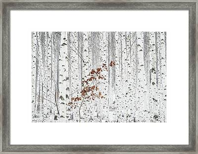 From White Framed Print