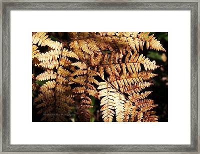 Frond Close Up Framed Print