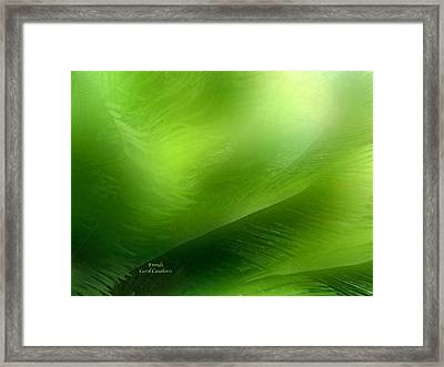 Fronds Framed Print by Carol Cavalaris
