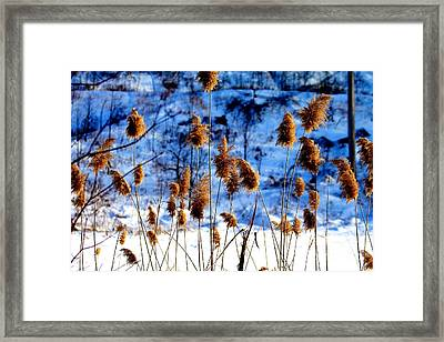 Framed Print featuring the photograph Fronds In Winter by Eleanor Abramson