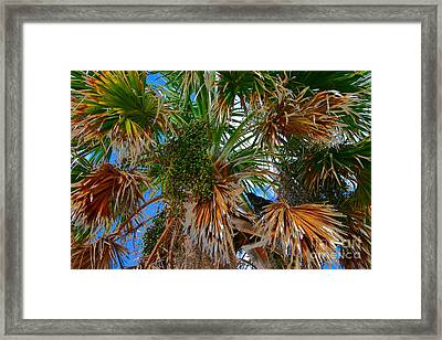 Frons And Feathers Framed Print