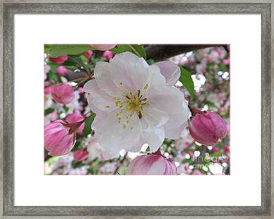 Front And Center Framed Print by Sara  Raber