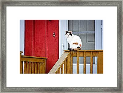 Front Porch Cat Framed Print