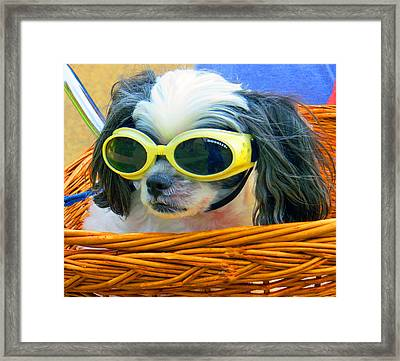 Front Seat Driver - Puppy Mania Framed Print