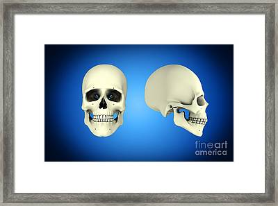 Front View And Side View Of Human Skull Framed Print by Stocktrek Images