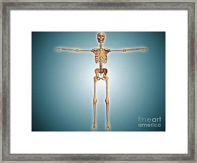 Front View Of Human Skeletal System Framed Print by Stocktrek Images