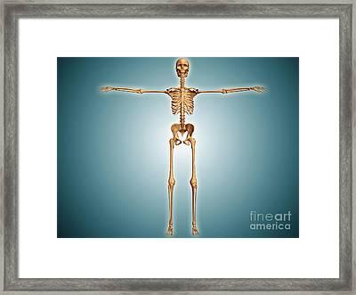 Front View Of Human Skeletal System Framed Print by Stocktrek Images