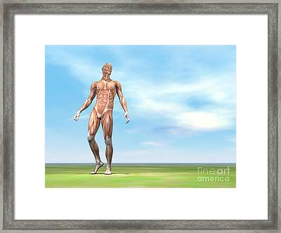 Front View Of Male Musculature Walking Framed Print