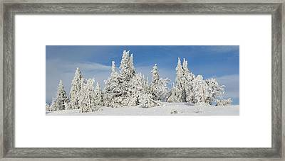 Frost And Ice On Trees In Midwinter Framed Print