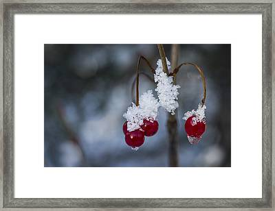 Frost Berries Framed Print