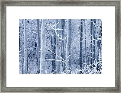 Frost Coated Birch Forest Near Knik Framed Print by Carl R. Battreall