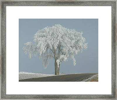 Frost Covered Lone Tree Framed Print by Penny Meyers